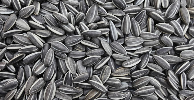 thicker beard sunflower seeds