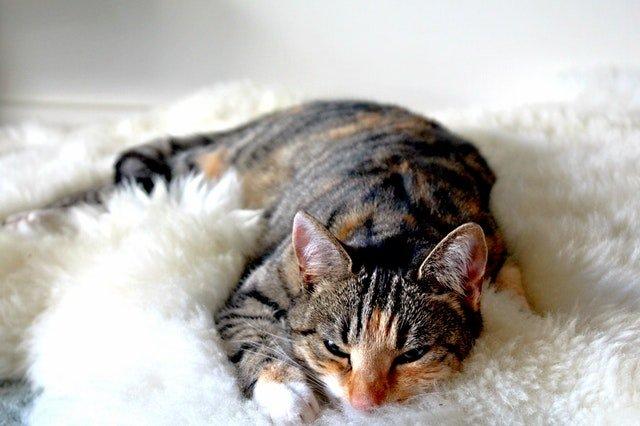 kitten on soft blanket