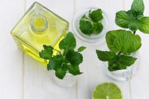 mint leaves and oil container