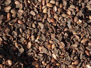 argan kernels
